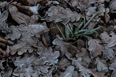 Eikenblad met gras