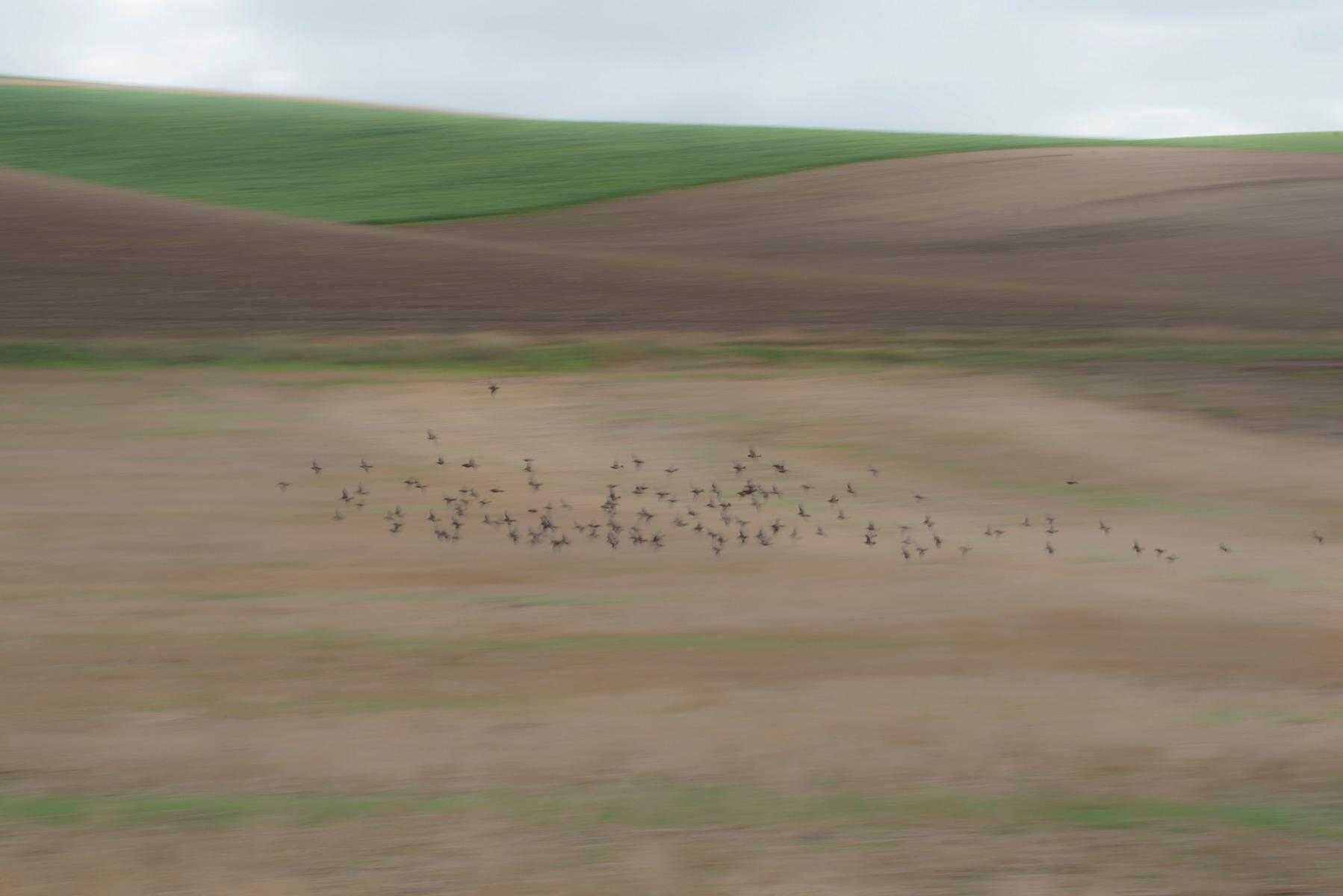 Escalles-vliegende-vogels