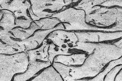 Tardinghen-detail-zeewier-Tagliatella-monochroom