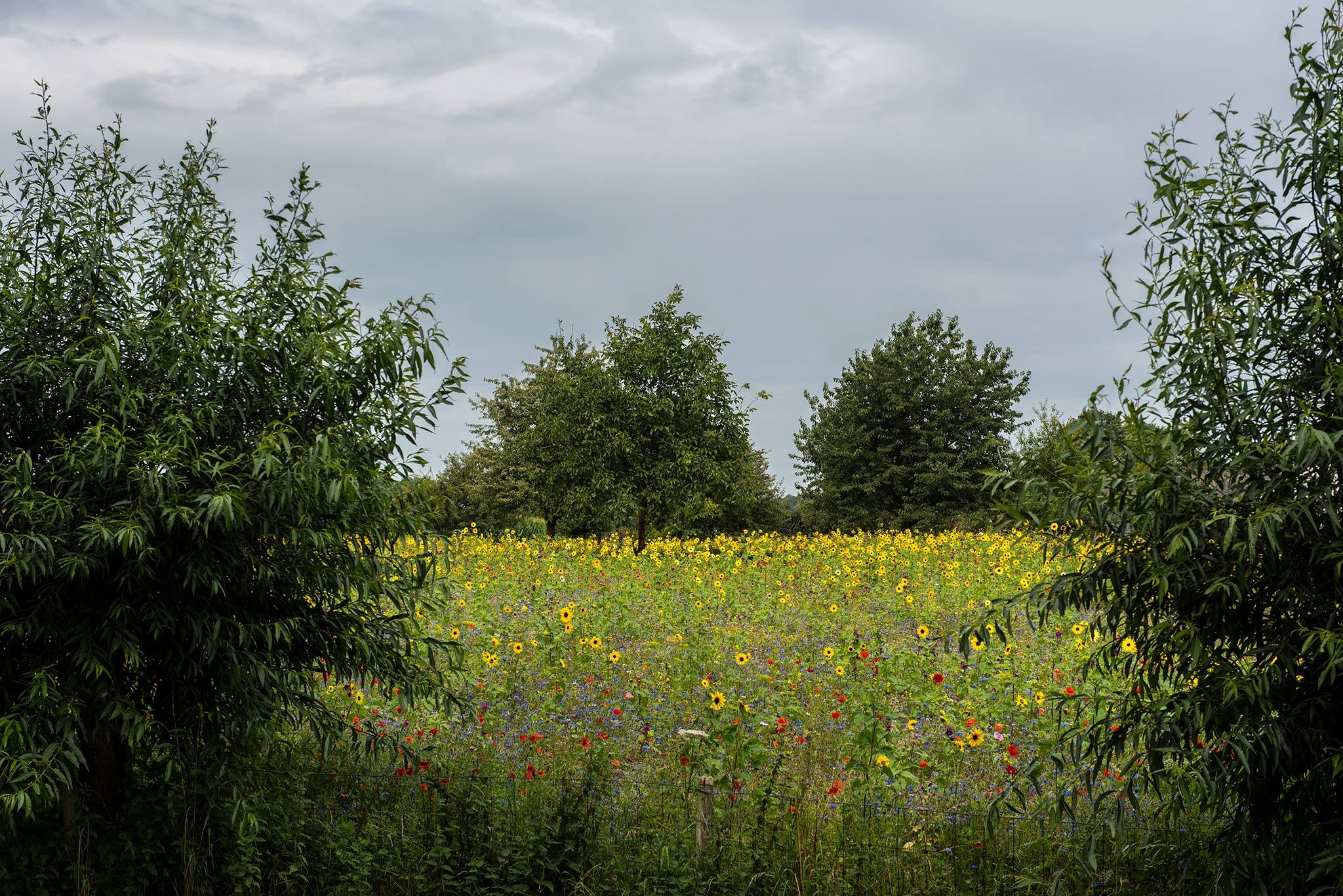 Bloemenweide - fotogeniek en tevens dekmantel